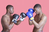 Side view of two African American boxers in fighting stance over pink background
