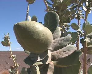 Зеленое растение в пустыне.