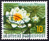 Postage stamp Germany 1957 Water Lily, Aquatic Plant poster
