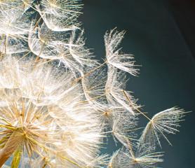 Pusteblume: Ich wünsche mir .... © doris oberfrank-list
