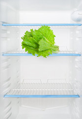 Lettuce in the refrigerator