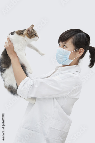 Side view of female veterinarian holding up cat against gray background