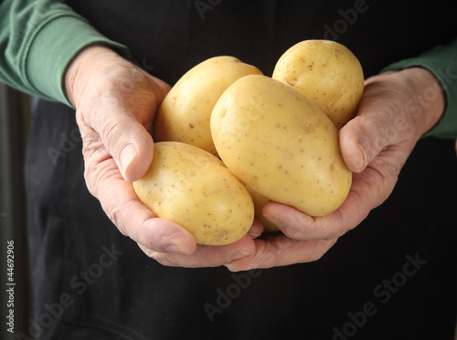 a man holds Yukon gold potatoes