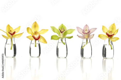 beauty set of colorful orchids in vase