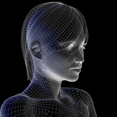 High resolution 3D wireframe human female head isolated