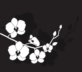 stylized white orchid