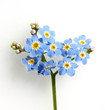 canvas print picture - Sumpfvergissmeinnicht, Myosotis palustris