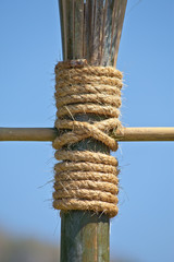 Large rope on bamboo tree