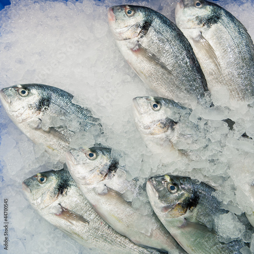 dorado fish on ice