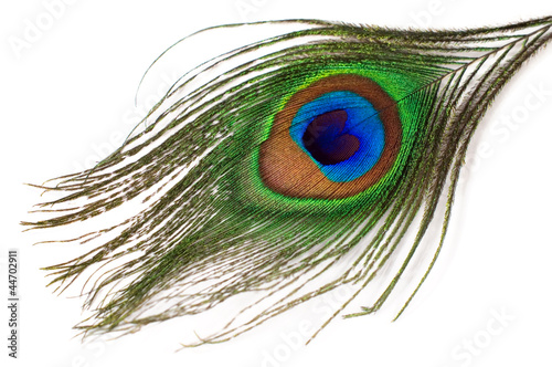 Foto op Plexiglas Pauw peacock feather isolated