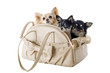 travel bag and chihuahuas