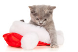 Beautiful cat in a Santa Claus hat