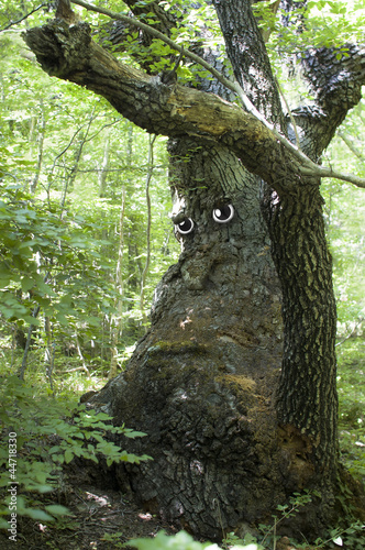 Sad old tree