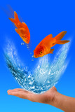 Goldfish Jumping.