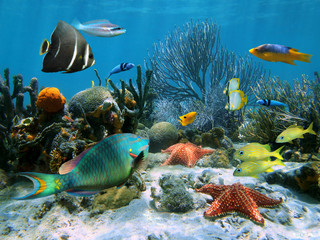 Coral reef and starfish