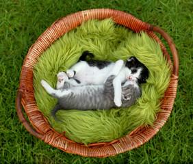 Little Kittens Hugging Outdoors in Natural Light