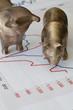 Bär und Bulle - Börse