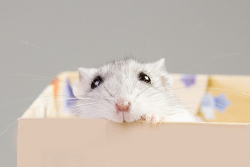 hamster sitting in a box.