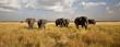 Fototapeten,elefant,afrika,tier,plain