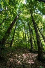 Prospettiva alberi