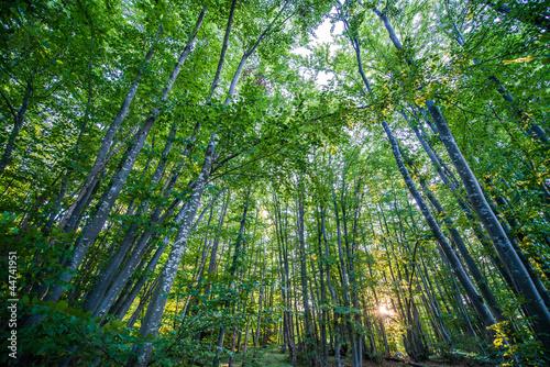 Fototapeta samoprzylepna Magic forest