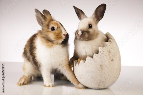 Bunny, rabbit