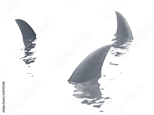 three sharks fin  on a white background..