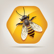 vector working bee on honeycell