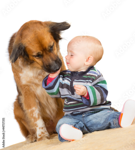 Dog licking a cute baby