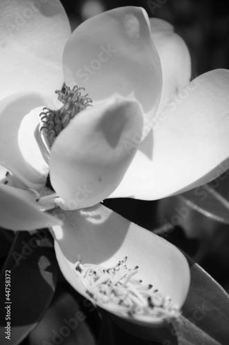 Magnolia 1 © aabiggerstaff