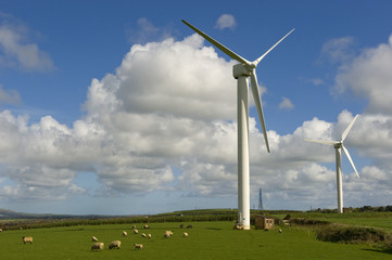 Wind turbines with sheep. These are in Cornwall (UK).