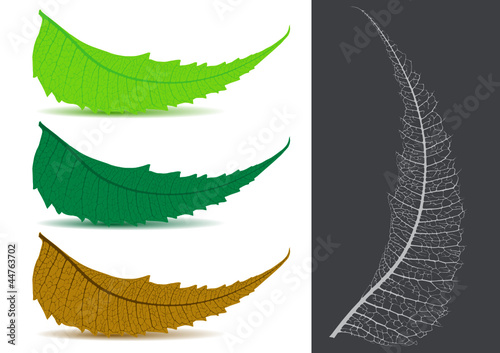 Indian Herbal / Medicinal Leaf - Neem Vector Illustration
