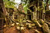 Tree of Ta Prohm, Angkor Wat