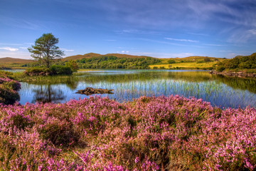 heather around loch