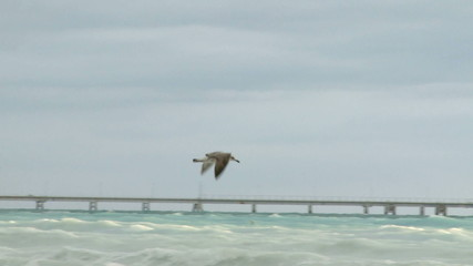 Seagull flying against wind