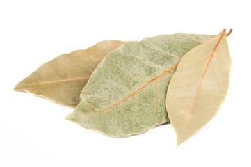 Dried Bay Leaves Isolated on White Background