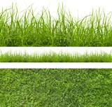 grass - 44782300