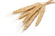 Wheat bundle - 44782723