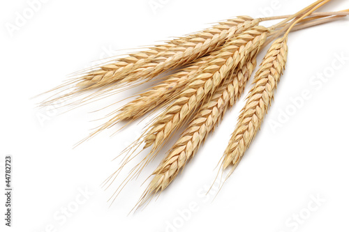 Bunch of yellow wheat ears isolated white background