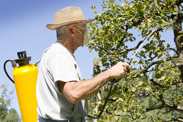 Gardener using a sprayer for applying an insecticide
