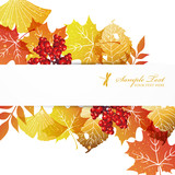 fallen leaves background