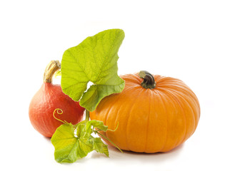 Pumpkin  with leaves isolated on white background