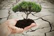 árbol en las manos sobre la sequía