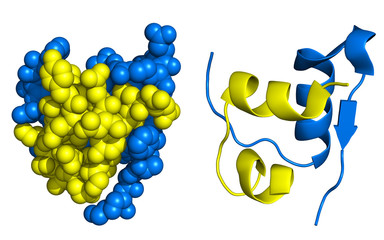 Insulin structure