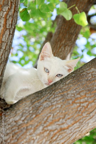 Little cat climbing