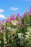 Beautiful wildflowers meadow