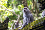 Two monkeys in Bali Ubud forest