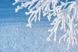 Fototapety Winter background.