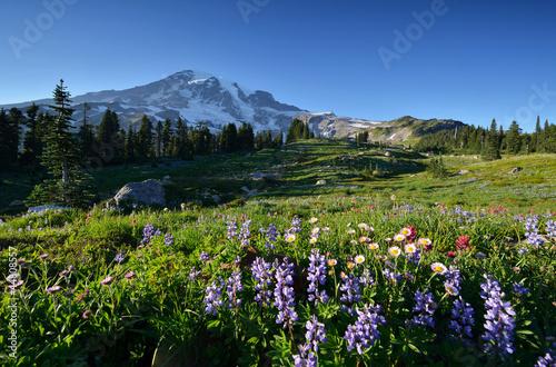 Wildflowers in Paradise, Mt. Rainier National Park © Lijuan Guo