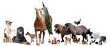 Fototapete Pferd - Pony - Nutztiere